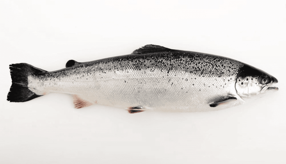 Cá hồi Na Uy nhập khẩu (Nguyên con)