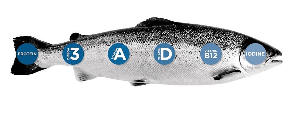 Dinh dưỡng trong cá hồi Na Uy